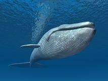 Balena blu Fotografia Stock