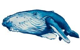 Balena dell'acquerello Fotografie Stock Libere da Diritti