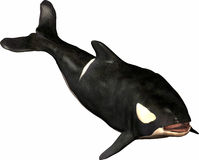 Balena dell'orca Fotografie Stock