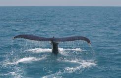 Balena della coda Fotografie Stock Libere da Diritti