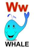 Balena della lettera W Fotografia Stock Libera da Diritti