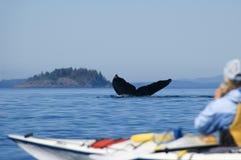 Balena di Humpback e kajak Immagini Stock