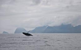 Balena di Seward nella violazione dell'Alaska Fotografia Stock