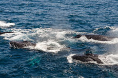 balene immagini stock