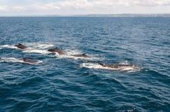 balene immagini stock libere da diritti