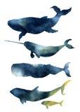 Balene dell'acquerello messe Siluette disegnate a mano degli animali di mare con struttura del cielo Stampe con la balena blu, ha illustrazione vettoriale