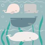 Balene della doccia di bambino Fotografie Stock Libere da Diritti