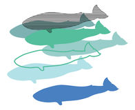 Balene, illustrazione digitale, Fotografia Stock