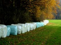 Baler av hö på kanten av en kulör autumskog som ska torkas Arkivfoton