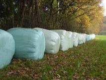 Baler av hö på kanten av en kulör autumskog som ska torkas Arkivbilder
