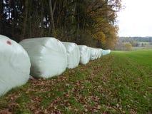 Baler av hö på kanten av en kulör autumskog som ska torkas Arkivbild