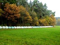 Baler av hö på kanten av en kulör autumskog som ska torkas Fotografering för Bildbyråer