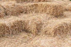 Baler av höbuntar in av den åkerbruka lantgården, symbolet av harves Arkivfoto