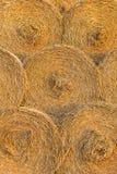 Baler av Hay Rolled Into Stacks Rolls av vete i gräset lodisar Royaltyfri Fotografi