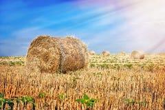 Baler av sugrör Arkivbild