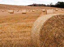 Baler av sugrör på ett fält Fotografering för Bildbyråer