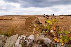 Baler av sugrör på ett fält Arkivbild