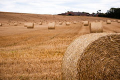 Baler av sugrör på ett fält Royaltyfria Foton