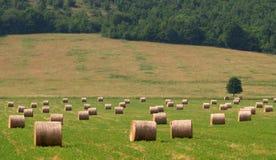 Baler av sugrör på ett fält Arkivbilder