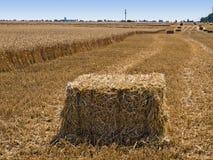 Baler av sugrör på fältet Arkivbilder
