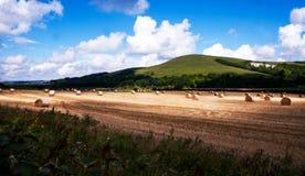 Baler i ett vetefält östliga Sussex arkivbild