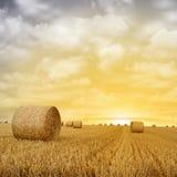 baler torkar sommar för jordbruksmarkisrael sugrör Royaltyfri Foto