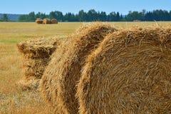 baler torkar sommar för jordbruksmarkisrael sugrör Fotografering för Bildbyråer