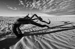 Balerina w piasku B&W obrazy stock