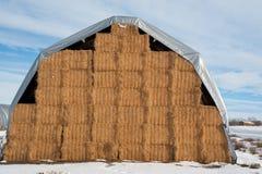 bales покрыли хранение сена Стоковые Изображения