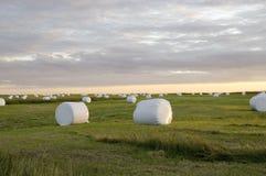 Bales сена в белой пластмассе, Исландии Стоковое Фото