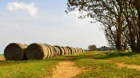 Bales сена в поле Стоковое Изображение RF
