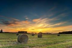 Bales сена в поле Стоковые Изображения