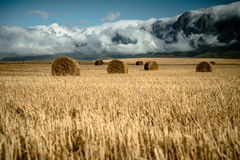 Bales сена в поле стоковые фото