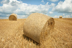 Bales сена на поле Стоковые Фото