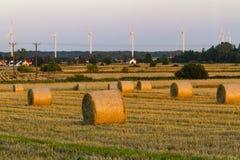 Bales сена на поле Стоковые Изображения