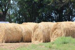 Bales сена Стоковые Фото