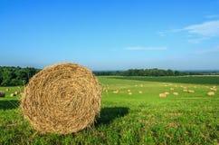 Bales сена Стоковая Фотография RF