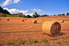 Bales сена Стоковая Фотография