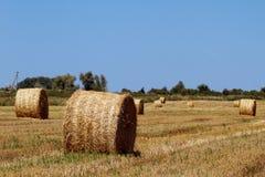 Bales сена Стоковые Фотографии RF