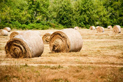 Bales сена Стоковые Изображения