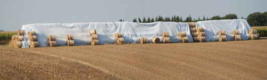 Bales сена. Стоковая Фотография