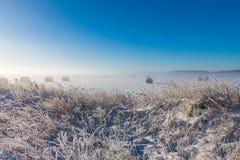 Bales сена Snowy Стоковые Изображения