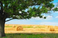 Bales сторновки на поле Стоковые Изображения RF