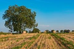 Bales сторновки на поле Стоковая Фотография