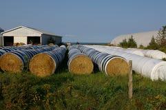bales 1 hay рядок Стоковое Изображение RF