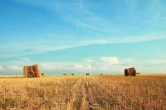 поле bales Стоковое Фото