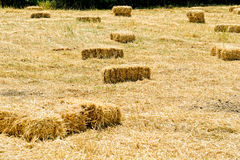 Bales on agricultural harvest field in Cunda Royalty Free Stock Photo