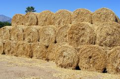 Bales aplenty Stock Photography