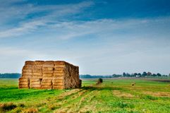 Bales of corn on the autumn field Royalty Free Stock Image