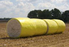 Bales of cotton line a field Stock Image